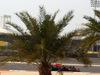 GP BAHRAIN, 17.04.2015 - Free Practice 1, Daniil Kvyat (RUS) Red Bull Racing RB11