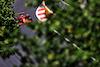 GP AZERBAIJAN, Charles Leclerc (MON) Ferrari SF-21. 04.06.2021. Formula 1 World Championship, Rd 6, Azerbaijan Grand Prix, Baku Street Circuit, Azerbaijan, Practice Day. - www.xpbimages.com, EMail: requests@xpbimages.com © Copyright: Moy / XPB Images