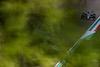 GP IMOLA, Yuki Tsunoda (JPN), Alpha Tauri 16.04.2021. Formula 1 World Championship, Rd 2, Emilia Romagna Grand Prix, Imola, Italy, Practice Day.- www.xpbimages.com, EMail: requests@xpbimages.com © Copyright: Charniaux / XPB Images